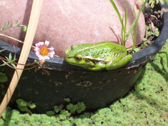 33715-frog27