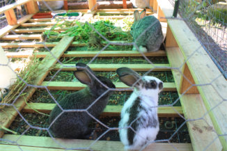 petit paradis rabbits