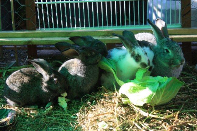 wabbits3