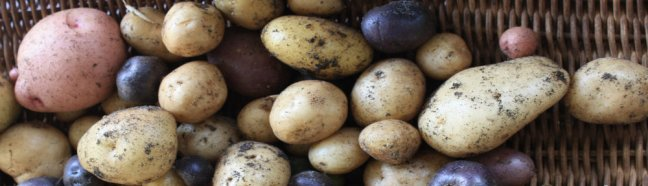 petit paradis potatoes