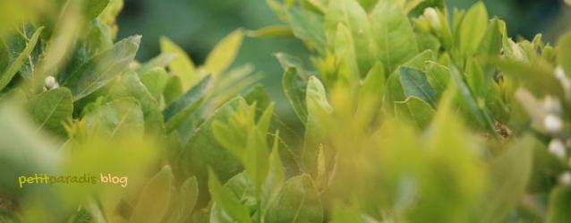 greenpetitparadis