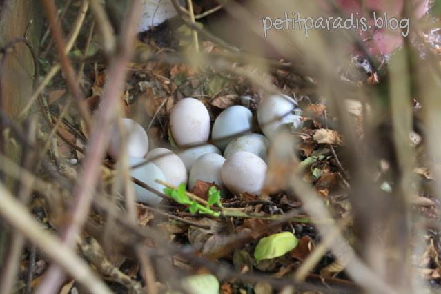 petitparadis eggs