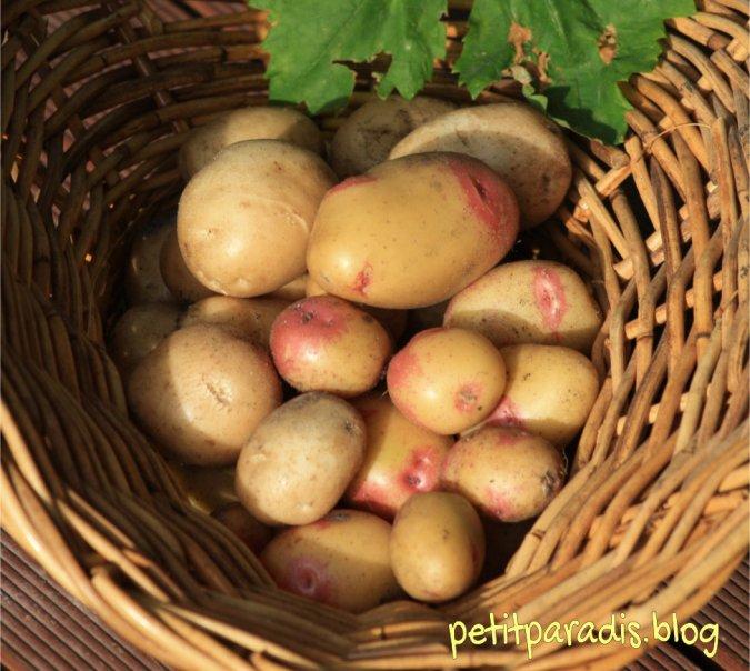 petitparadis potatoes