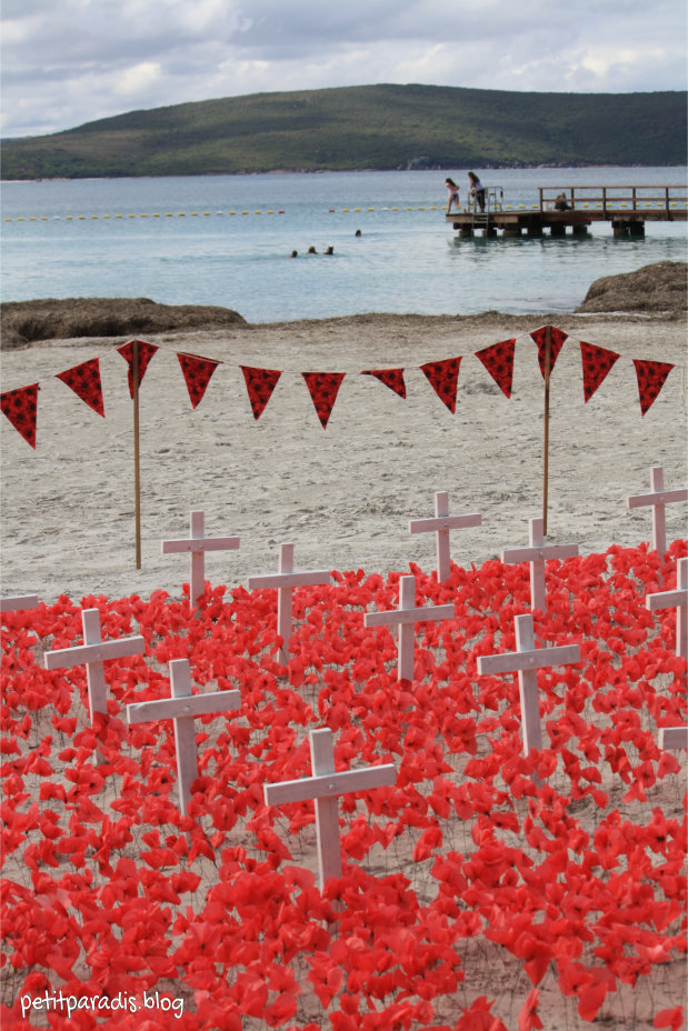 poppies at middleton beach pp