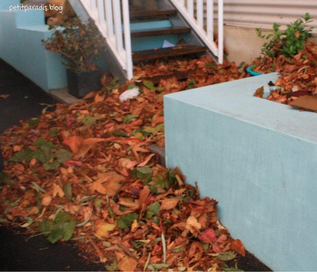 petit paradis leaf trap