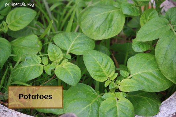 potatoes petit paradis
