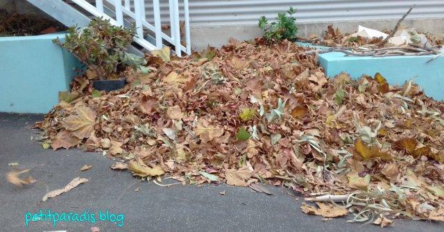 leaf pile petit paradis