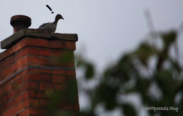 pp w duck 2