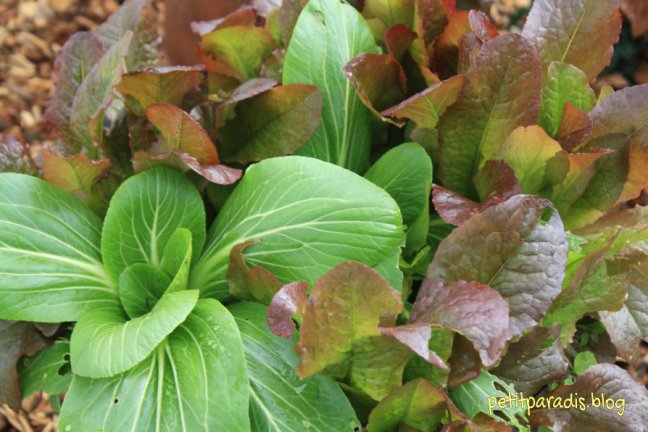 pp winter salad greens