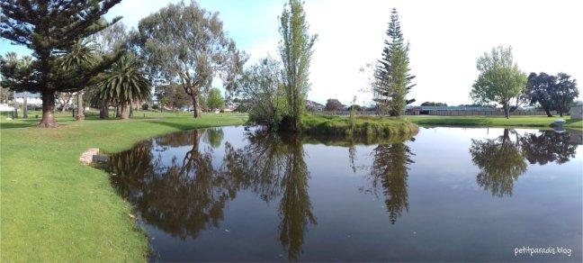 spring pond pp