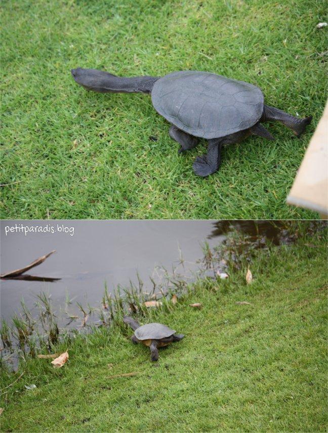 turtle 2 pp