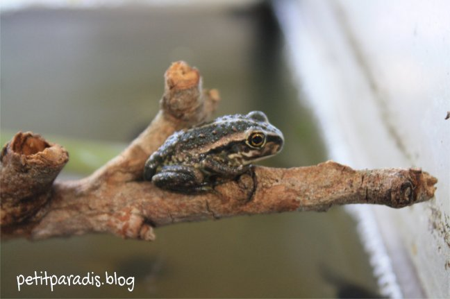 fresh frog pp