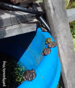 frogs sunning pp