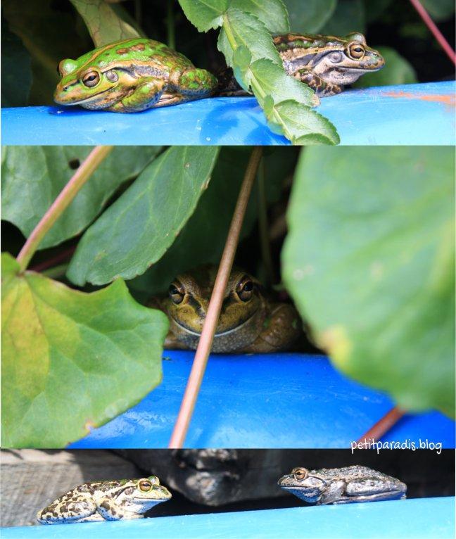 frogspond