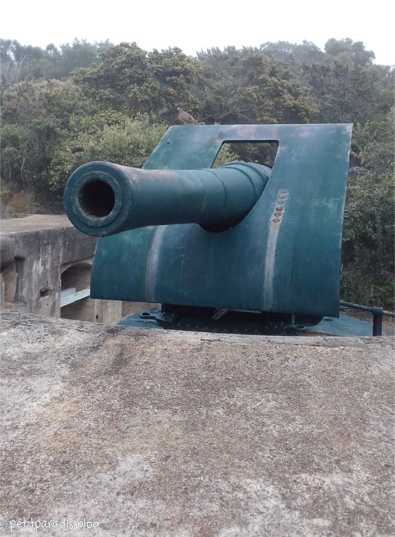 cannon pp