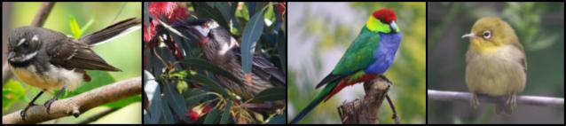 birds pp