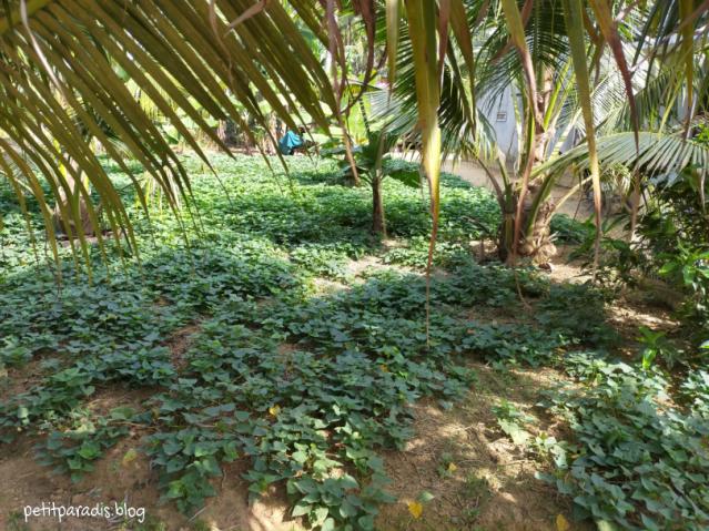 house garden vietnam pp
